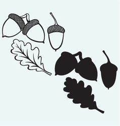 Acorns with leaf vector image