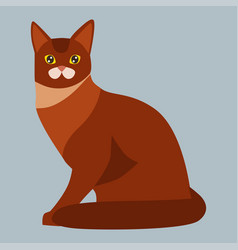 cat breed abyssinian cute pet portrait fluffy red vector image vector image