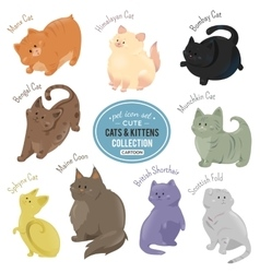 Cute cats and kittens depicting different fur vector image vector image