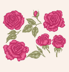 pink rose flowers and leaves in vintage style vector image vector image