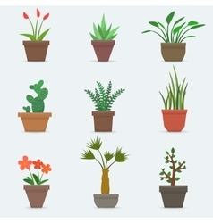 House plants and flowers in pots vector image
