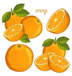 Orange Isolated vector