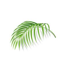 realistic fern tropical plant green leaf vector image