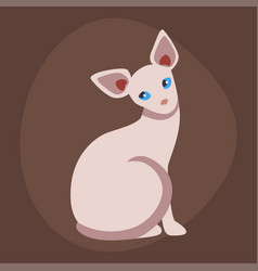 cat breed cute pet sphinx portrait fluffy young vector image vector image