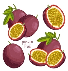 Passion Fruit Isolated vector image vector image