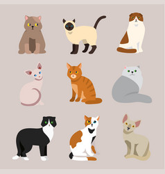 cat breed cute pet portrait fluffy young adorable vector image vector image