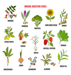 Best foods for the immune system vector