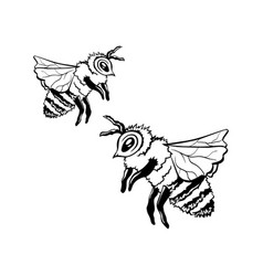 black outline sketch of two honey bees vector image