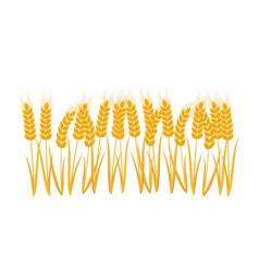 ears wheat set vector image