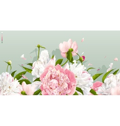 Peony background vector image