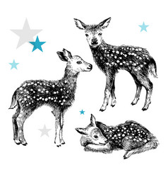 3 hand drawn baby deers in vintage style vector image vector image