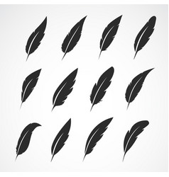 group of feather on white background vector image