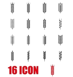 grey wheat ear icon set vector image