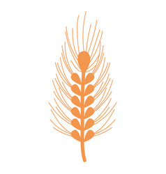 healthy wheat organ plant nutricious vector image