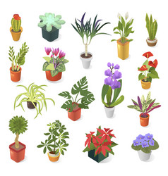 home plant for green decoration isometric vector image