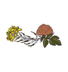 Isolated clipart mustard vector
