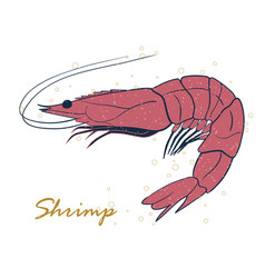 shrimp sea caridea animal hand drawn vector image