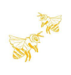 yellow outline sketch of two honey bees vector image