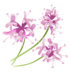 pink flowers isolated on white background vector image vector image