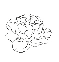 Contour of rose vector