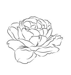 Contour rose vector