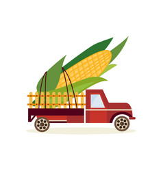 farming harvest concept with big ear of corn in vector image