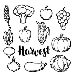 Harvest set of fruits and vegetables autumn vector