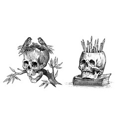human skull with birds and pencils retro old vector image