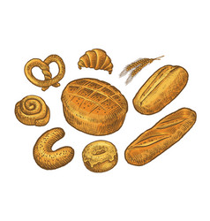 bread baked goods sketch bakery bakeshop food vector image