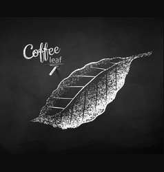Chalk drawn sketch coffee leaf vector
