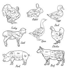 Meat symbols vintage cut scheme vector