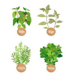 Rosemary and parsley set chile sage vector