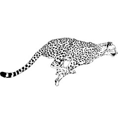 running cheetah drawn in ink hand vector image
