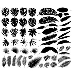set of silhouettes of tropical leaves botanical vector image