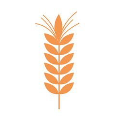 healthy wheat organ plant nutricious background vector image vector image
