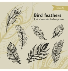 bird fethers vector image