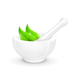 Mortar and Pestle with Herb vector image vector image