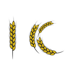Agriculture rice icon vector