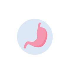 human abdomen organ icon a stomach in circle flat vector image