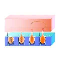 nematocys scheme vector image