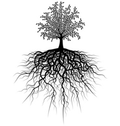 root tree vector image