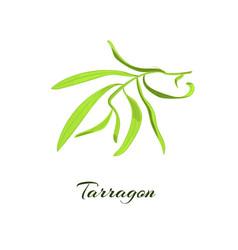 Tarragon herb vector