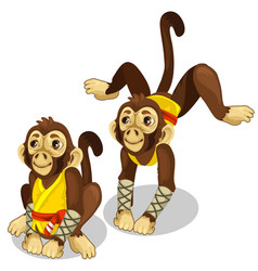Two monkeys in a karate costume animals vector