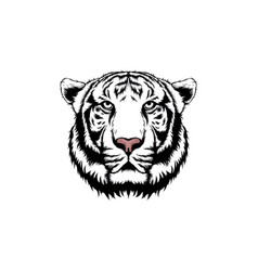 white tiger isolated on white backgr vector image