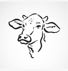 cow head on white background farm animals vector image