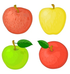 fruits apples vector image