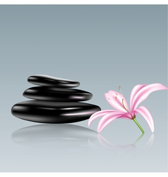 Spa stones and lily flower vector image