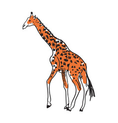 giraffe hand drawn isolated icon vector image