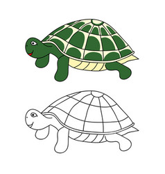 green turtle vector image