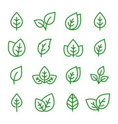 Natural set green leaves line icons vector